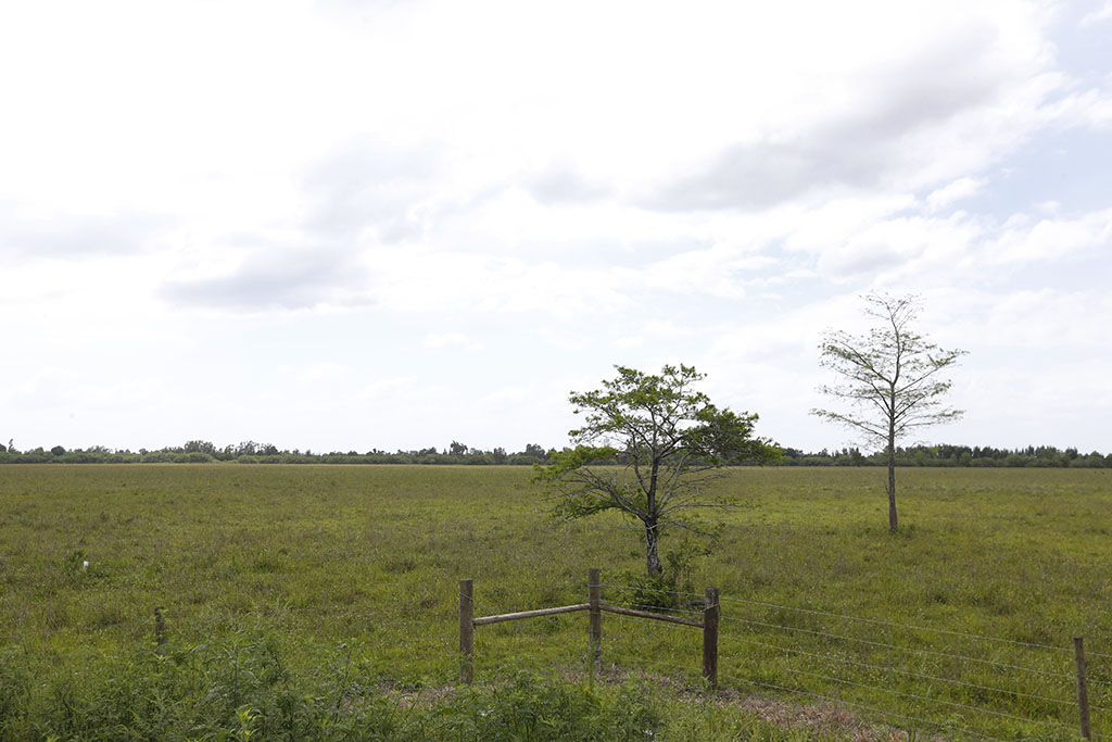 <p>The land where developers are proposing to build American Dream Miami, a 200-acre project on the edge of the Everglades in bustling South Florida that would dwarf any other shopping mecca in North America. (AP Photo/Wilfredo Lee)</p>