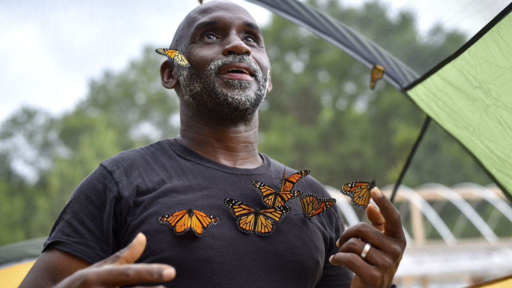 <p>Joel Enge collects monarch butterflies to put on him for a portrait at Kingdom Life Academy's garden in Tyler, Texas. Enge has been raising butterflies as a hobby for 16 years and typically does a butterfly release each year with either his students or his church. (Chelsea Purgahn/Tyler Morning Telegraph)</p>
