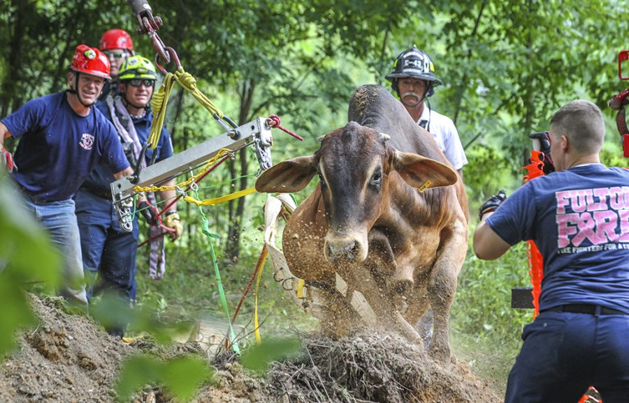 Animal rescue crews help a bull that was trapped inside a well in Fairburn, Ga. Crews used a backhoe to dig a bigger hole so the animal could walk out.  (John Spink/Atlanta Journal-Constitution via AP)