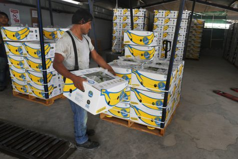 A worker stacks boxes of Chiquita bananas.